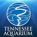 tennessee aquarium ticket prices